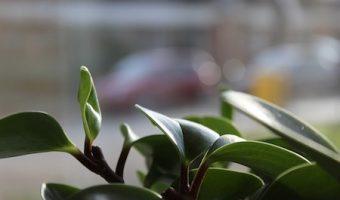観葉植物を玄関に置くと気が変わる!風水おすすめ植物ベスト5!