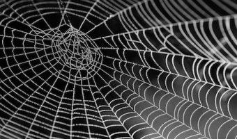夢占いで本当のあなたがわかる、夢に蜘蛛が出てきた時の7つのメッセージ