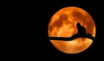 夢占いで今のあなたがわかる、夢に猫が出てきた時の7つのポイント